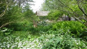 Foret-jardin-M-Crawford-1